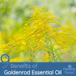9 Benefits of Goldenrod Essential Oil – Healthy Focus