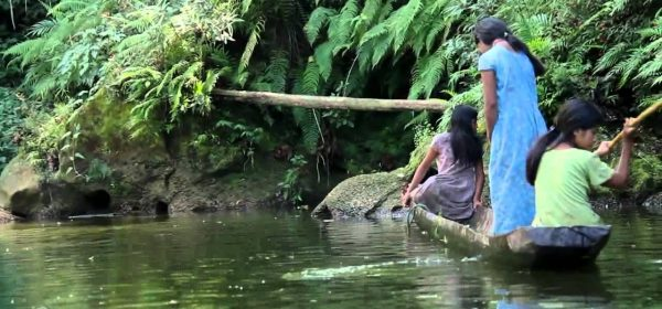 Gout and the Tsimane Tribe